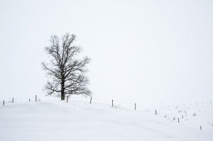 Winter - Irsee  (Available for Print)