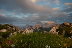 Flowers - Tannheimer Tal  (Available for Print)